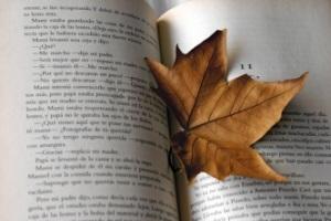 Hola seca y libro
