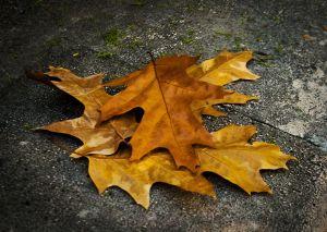 Hojas de otoño - Alfonso Bustos Toldos